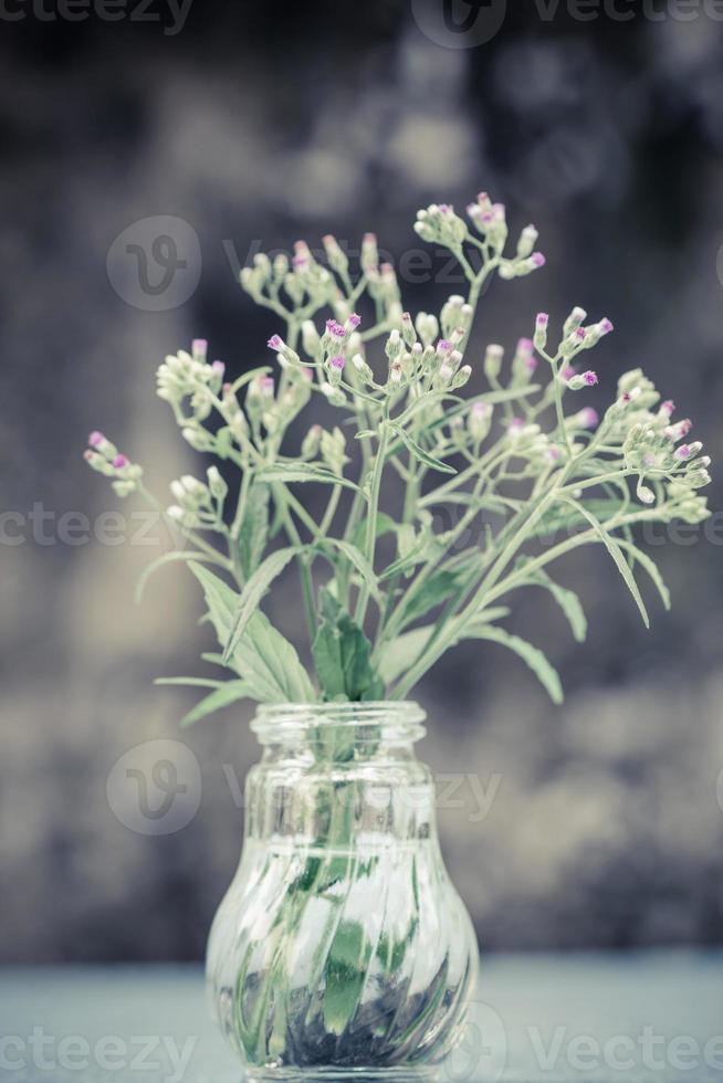 Flores de hierba en jarrón de botellas de vidrio, enfoque selectivo foto