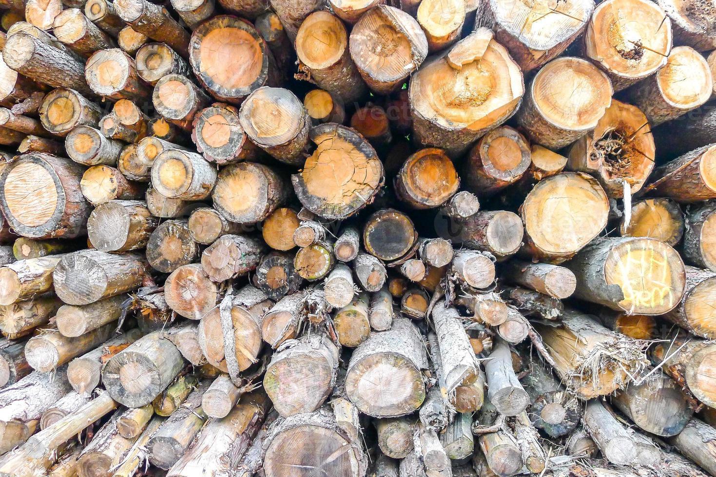 fondo de troncos de madera foto