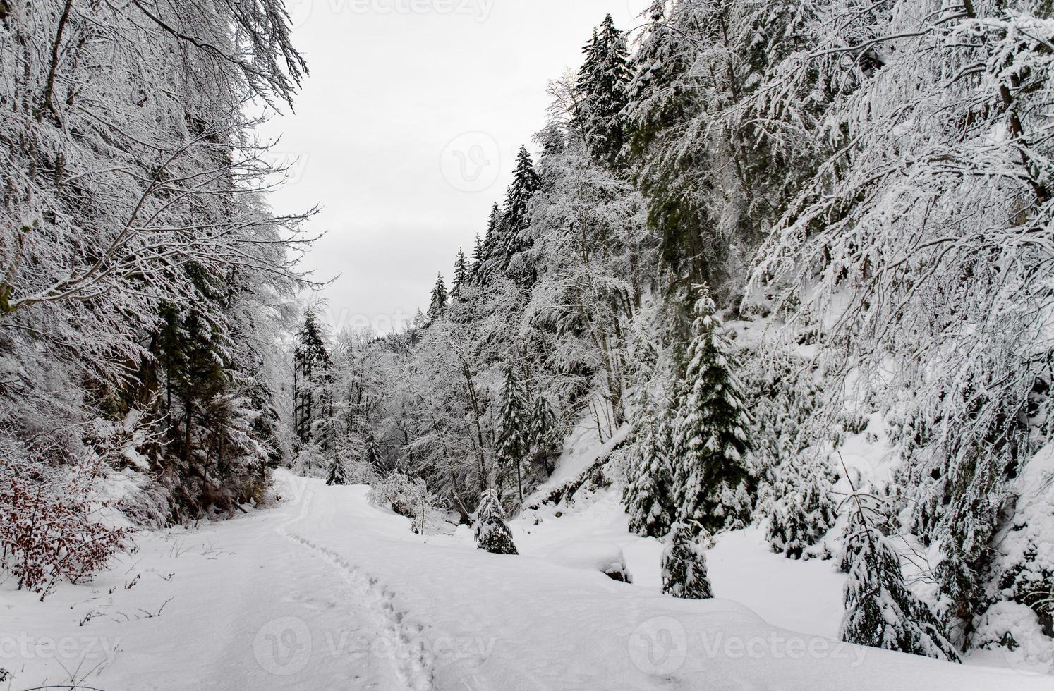 árboles cubiertos de nieve en las montañas. foto