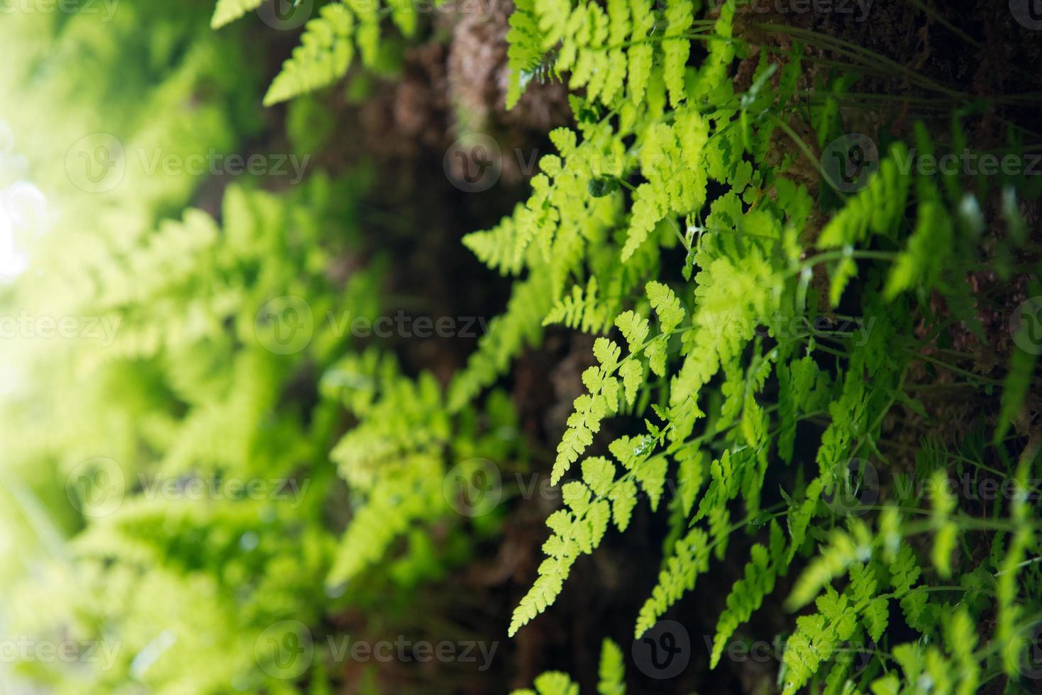 helecho verde foto