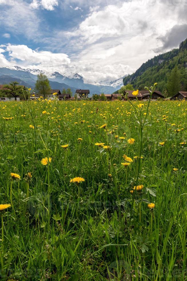 Lago de Brienz, región de Interlaken en Suiza foto