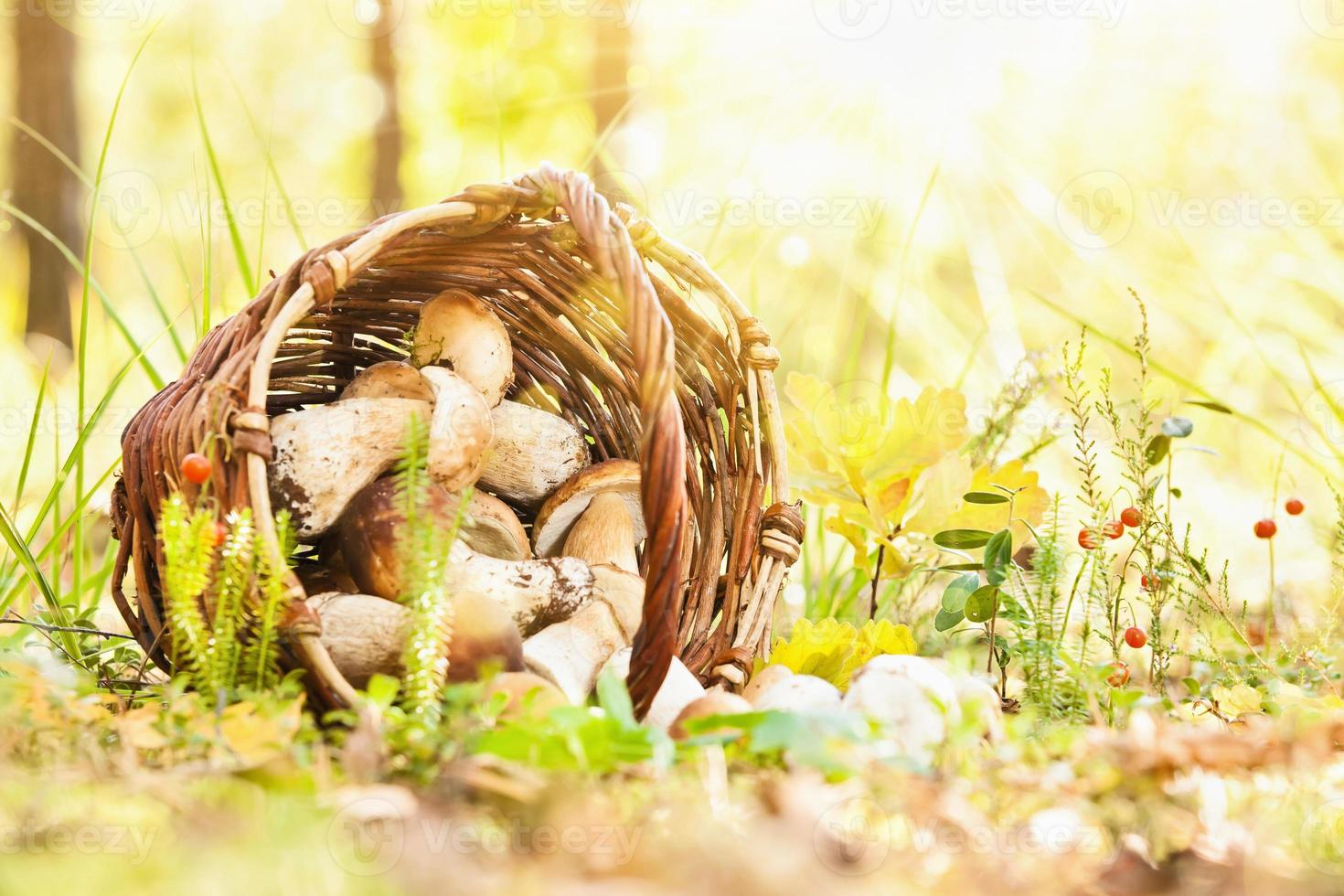 Natural background with mushrooms photo