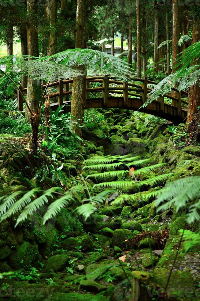 Bridge and green moss environment photo