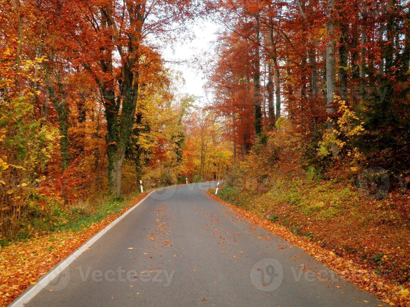 Beautiful Autumn Road photo
