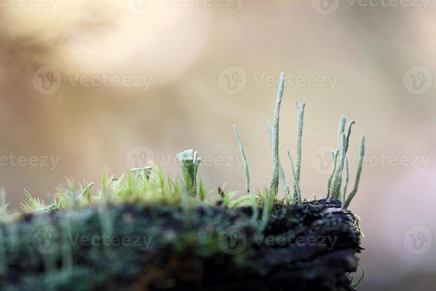 macro moss photo