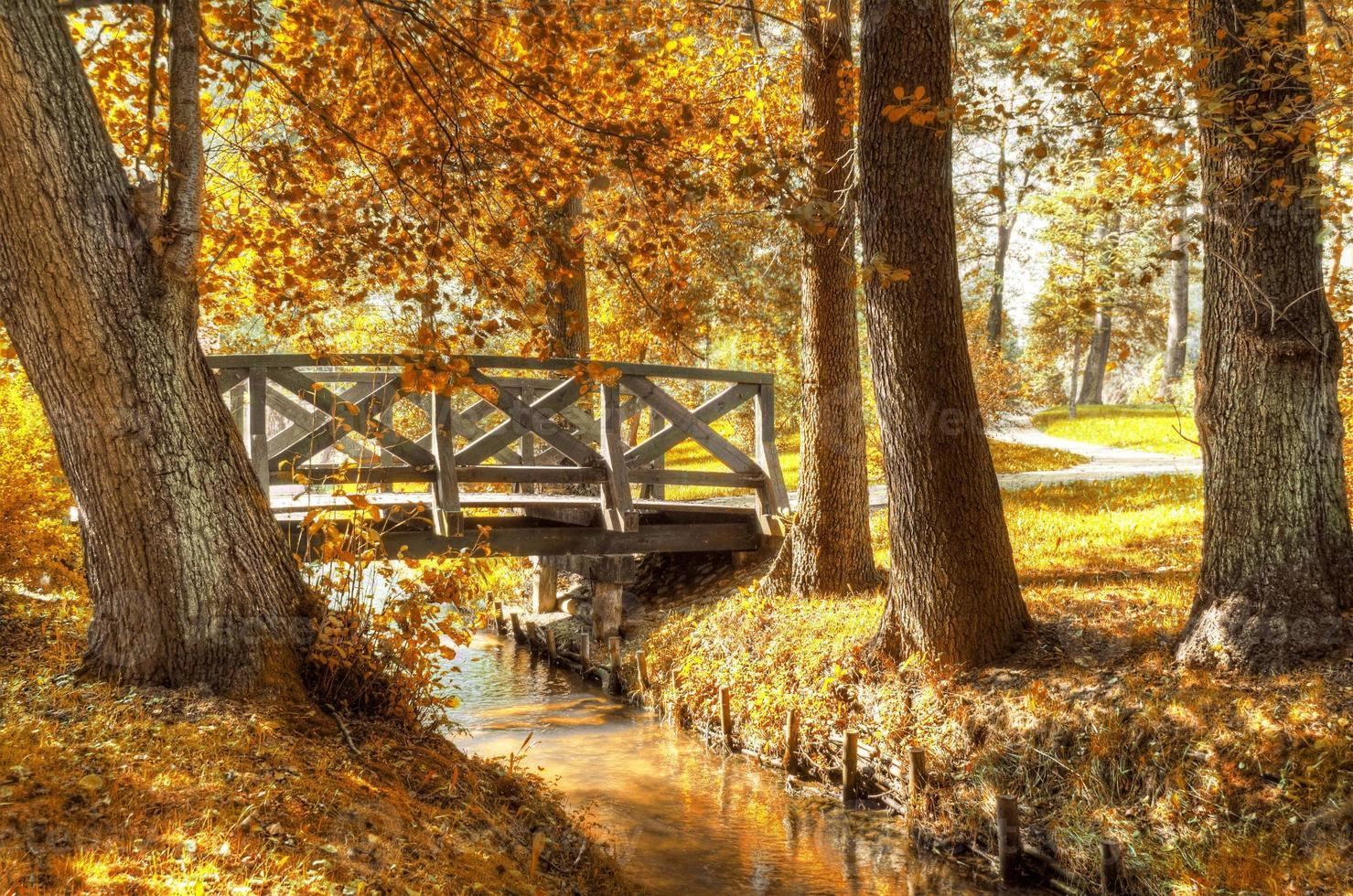 Autumn scenery. photo