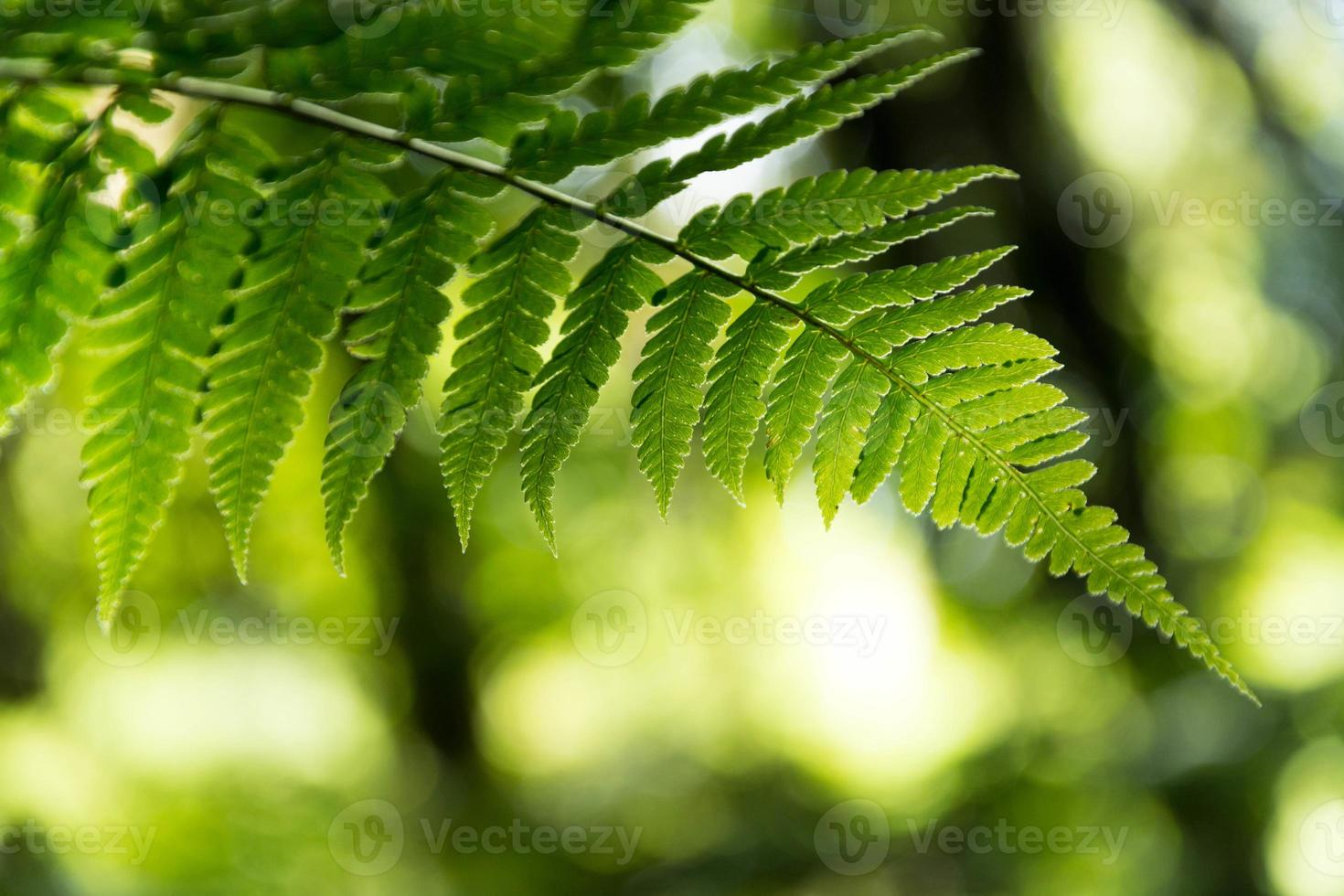 Fern leaf with water drops close-up photo