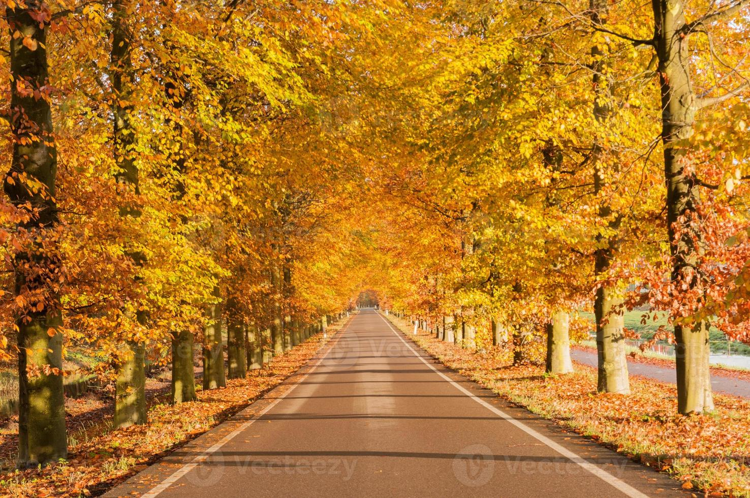 Autumn in the Netherlands photo