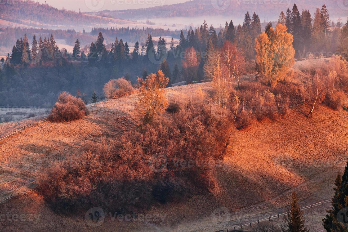 november morning in carpathian photo