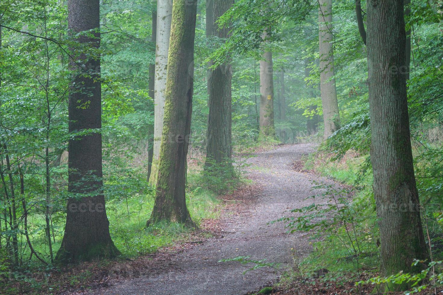 Steigerwald Forrest photo