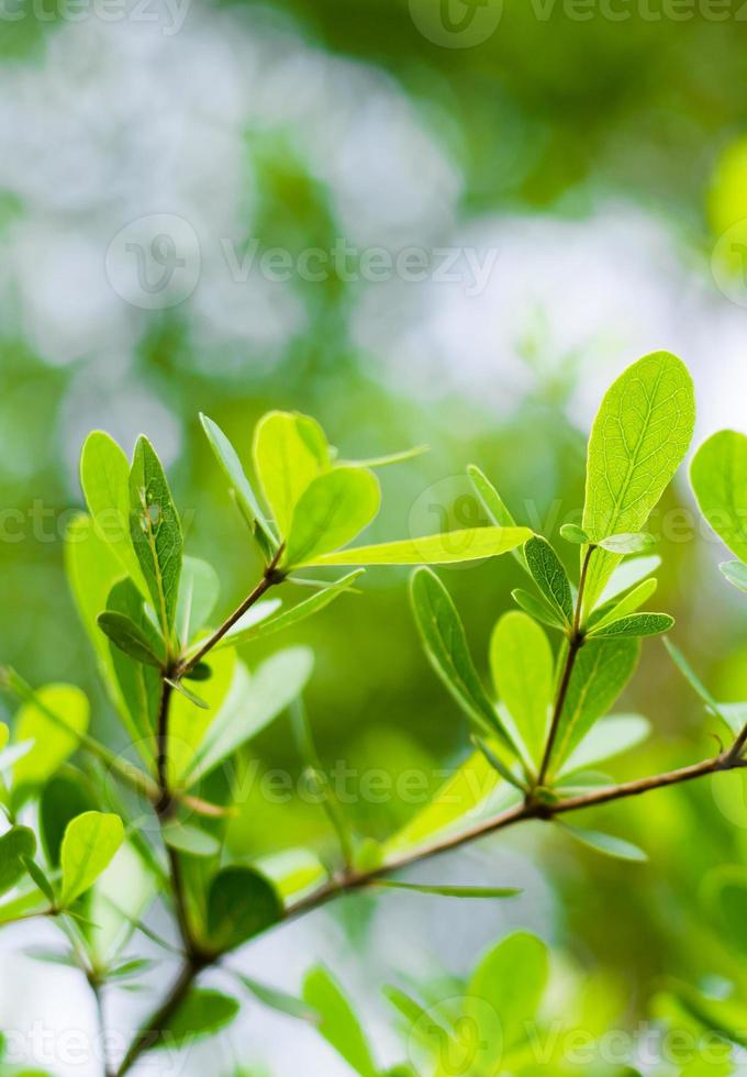 Green leaves background photo