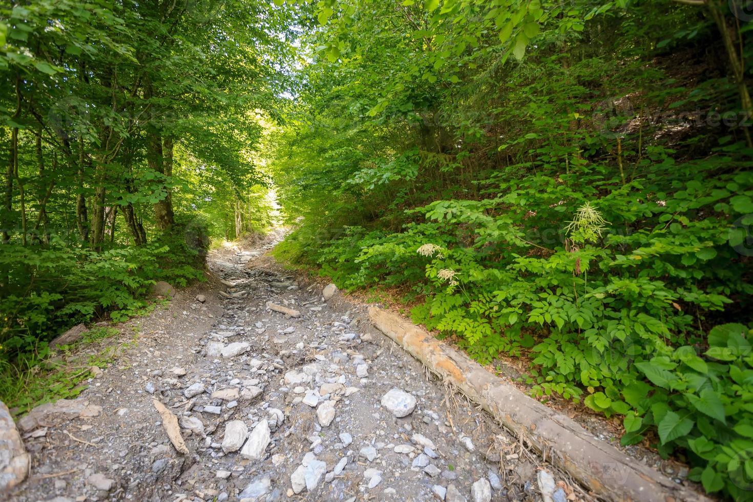 mountain trail with stones photo