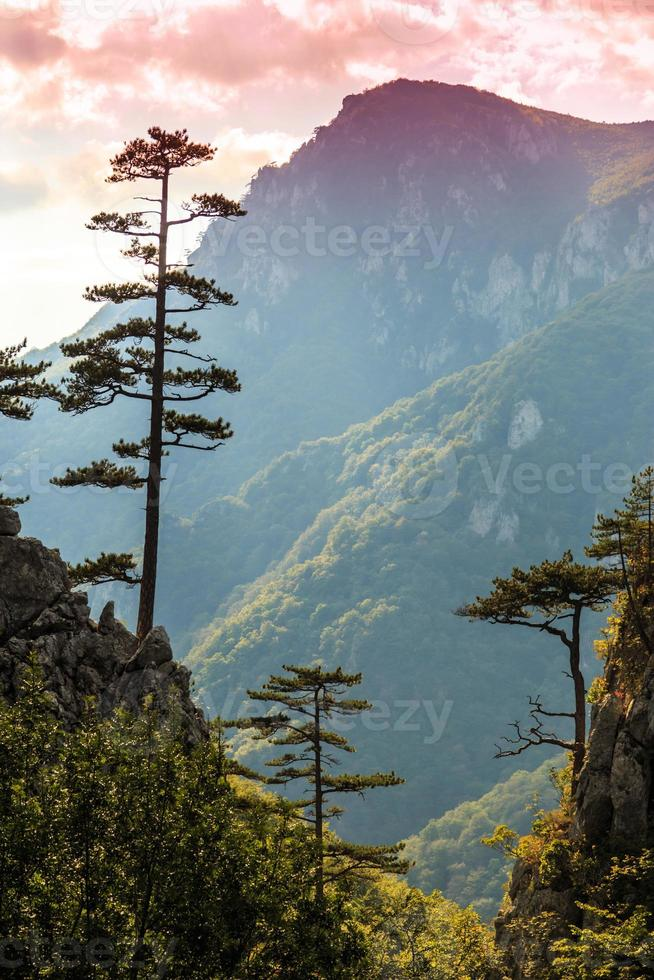 Mountain scenery with black pine tree silhouettes and stormy sky photo