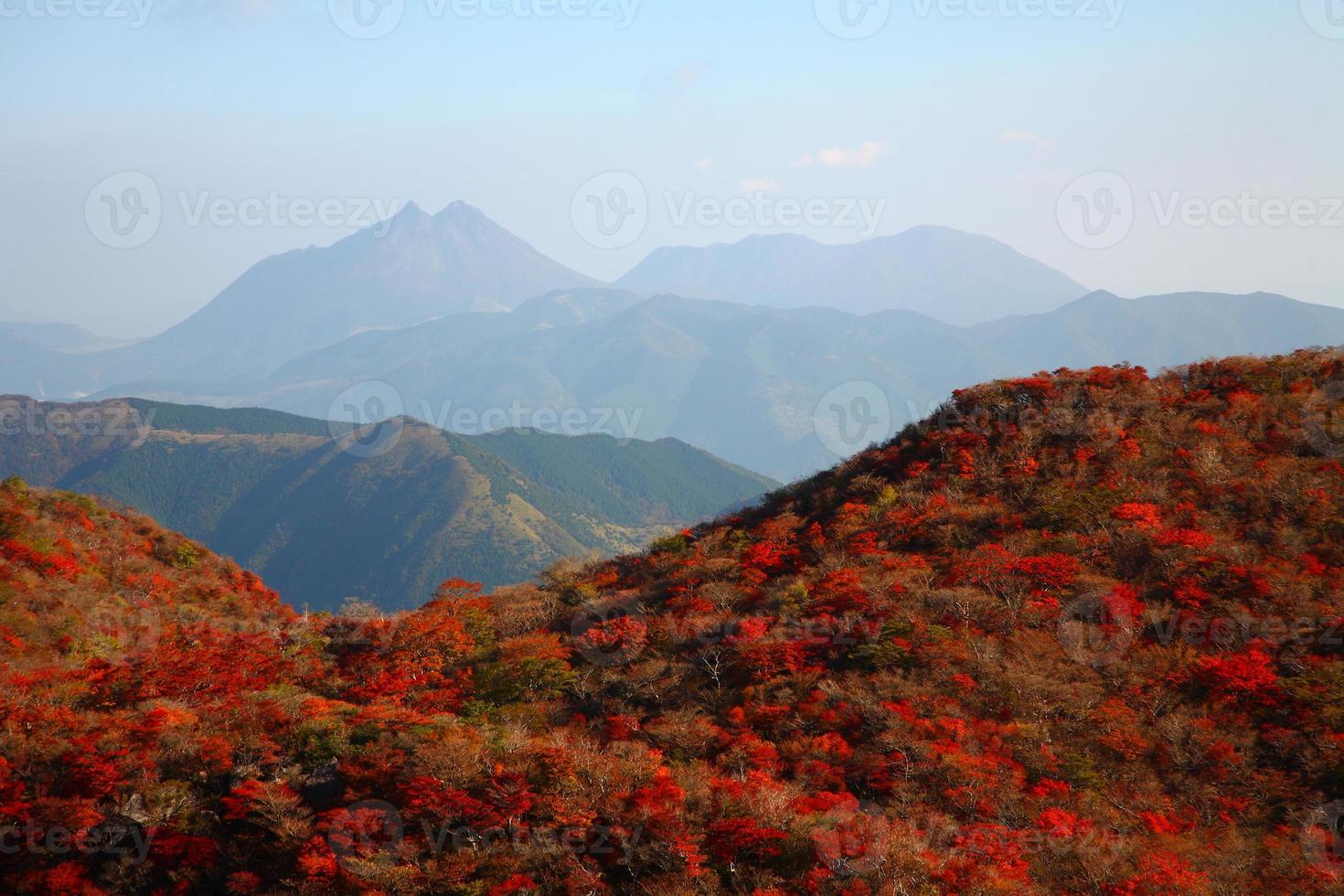 hojas de otoño de la montaña foto