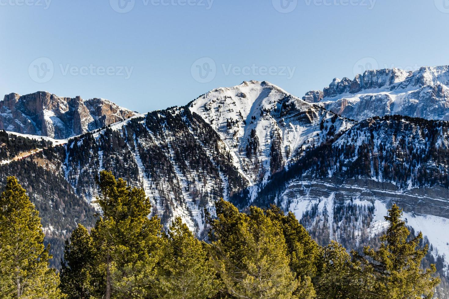 panorama of the Dolomites with snow-capped peaks and conifers photo