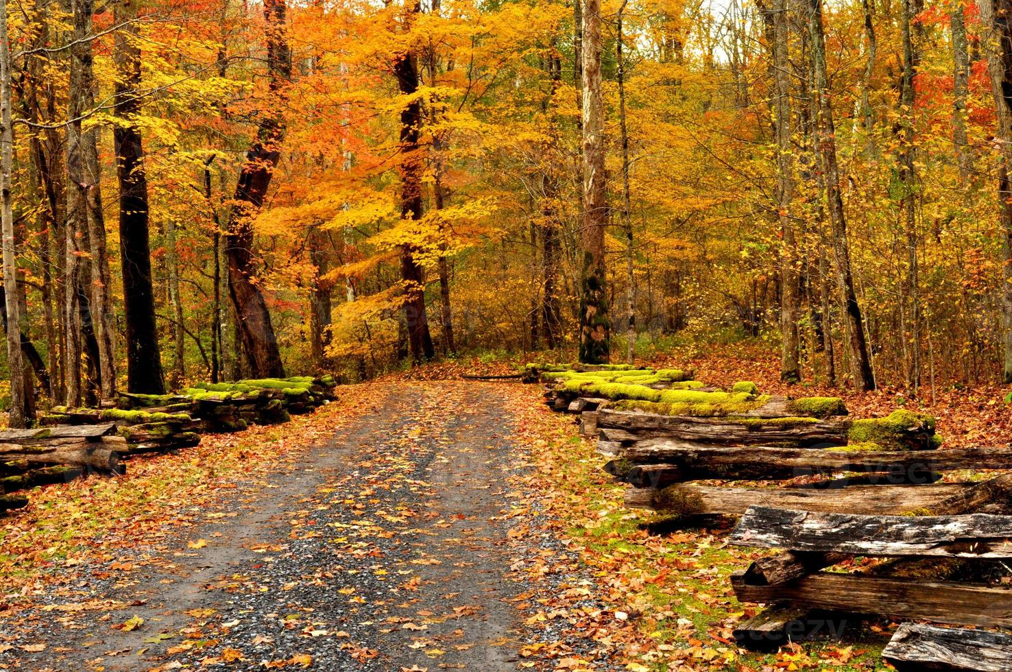 In fall, split rail fences are covered with moss. photo