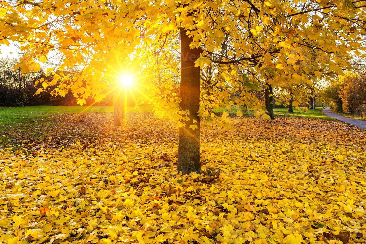 Sunny autumn foliage photo