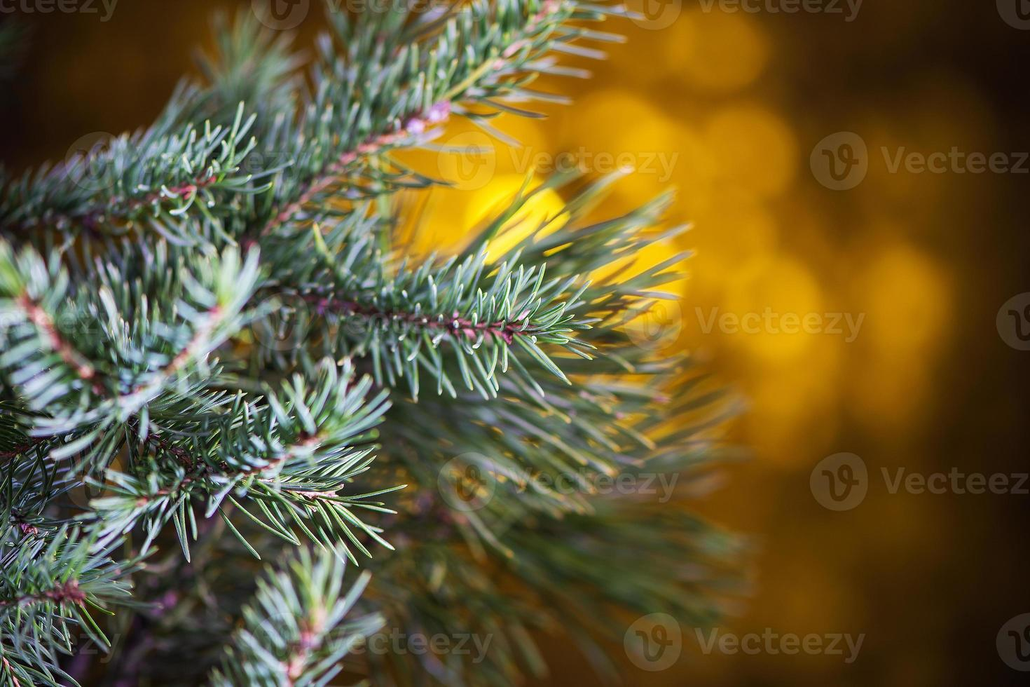 bokeh de árbol de navidad foto
