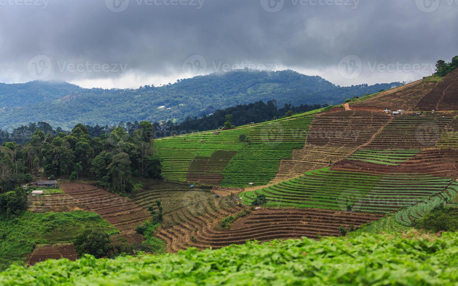 Terrace agriculture on tropical mountain photo