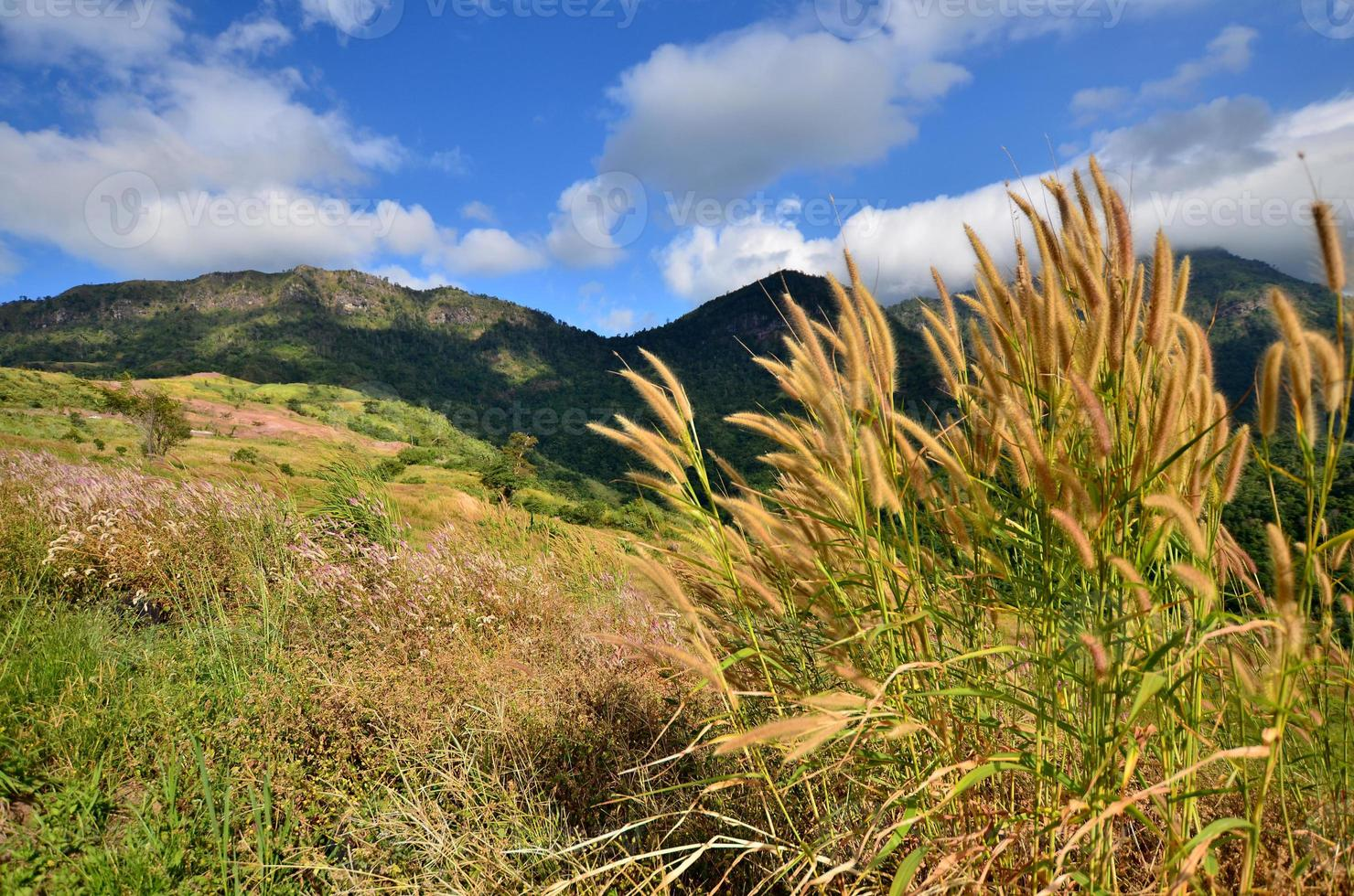 Grass Fields on the Mountain photo