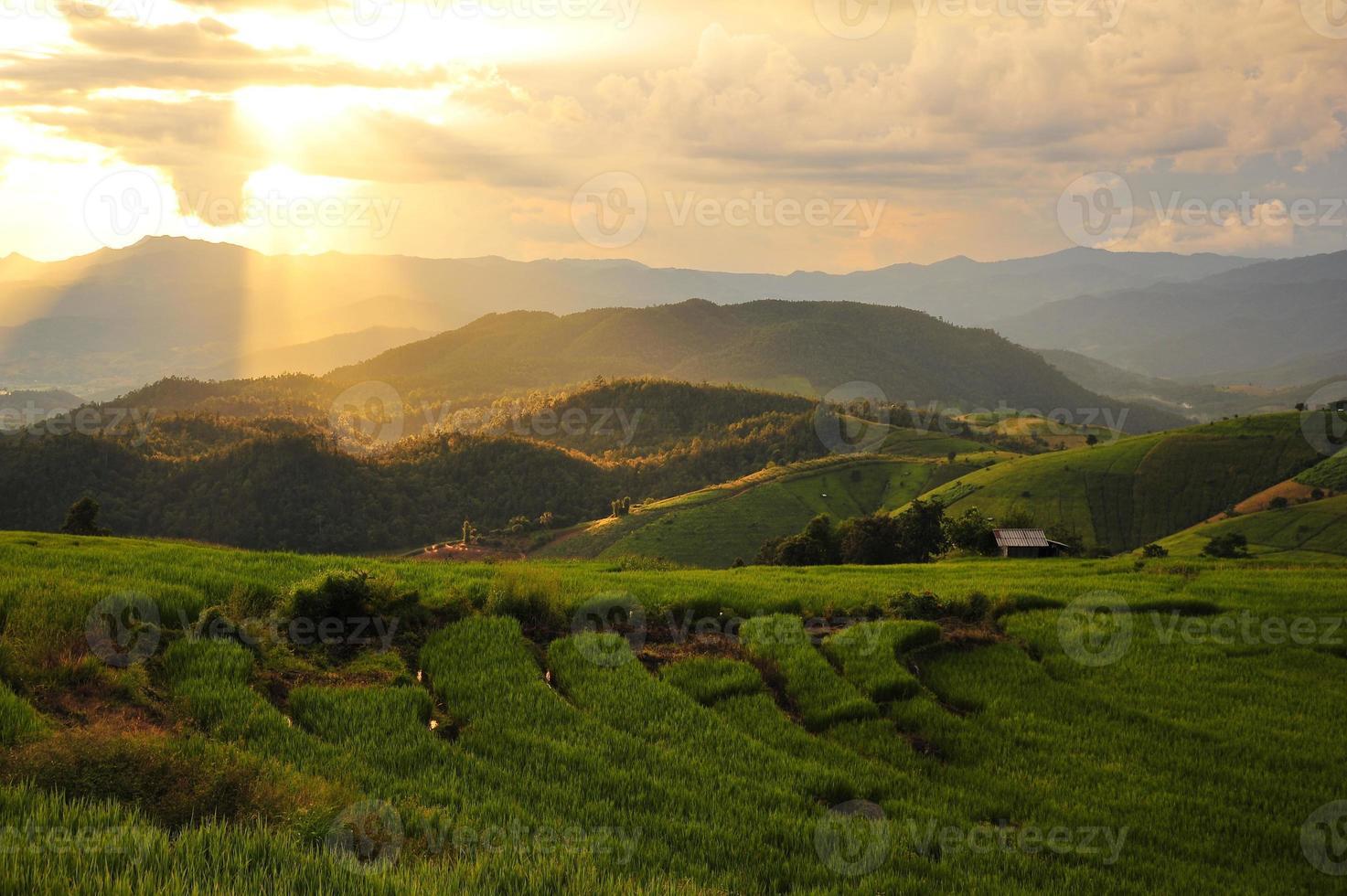 Rice Paddy Fields on Mountain photo
