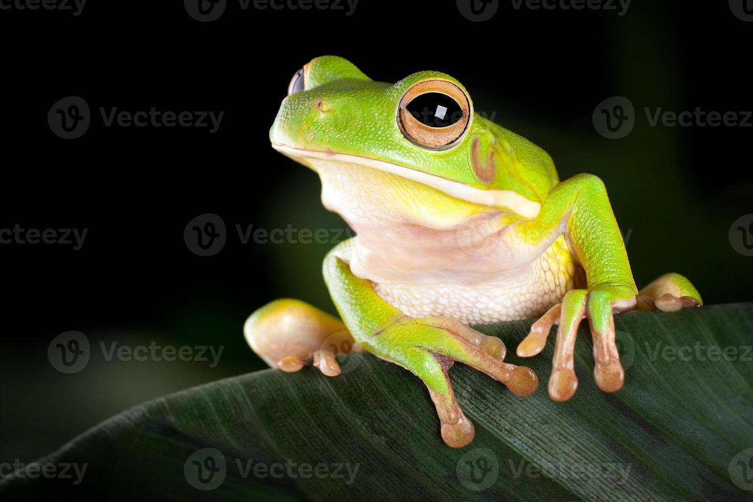 Tree frog in natural environment photo