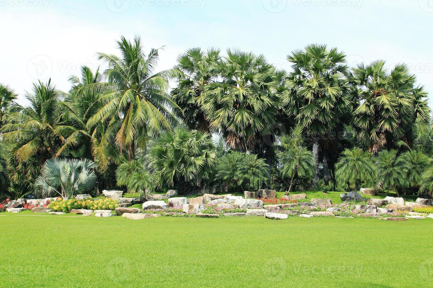 vista de palmeras foto