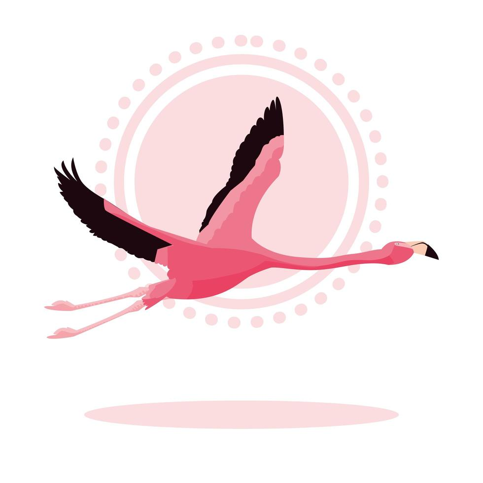 hermoso pájaro flamenco volando vector
