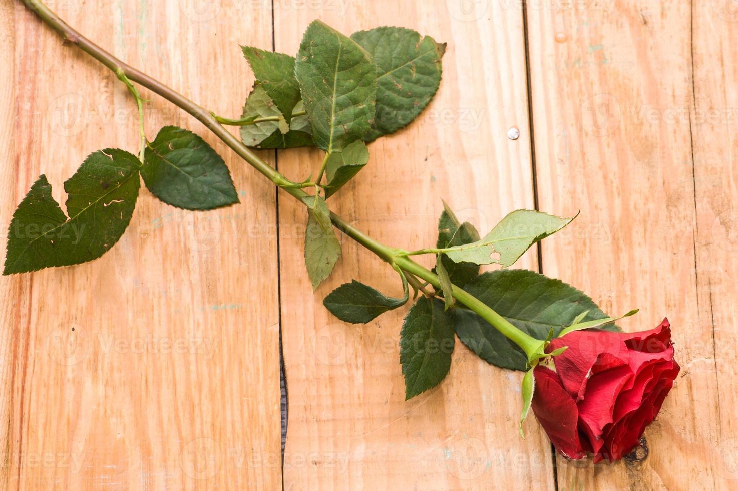 Red rose on vintage wooden planks background photo