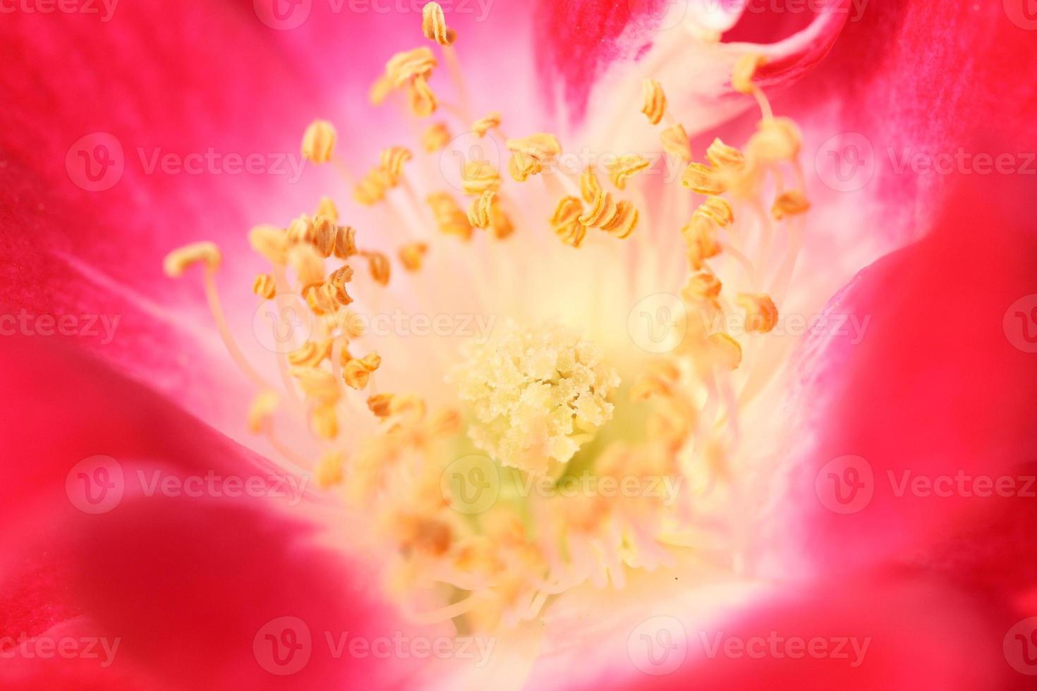 beautiful red flowers photo