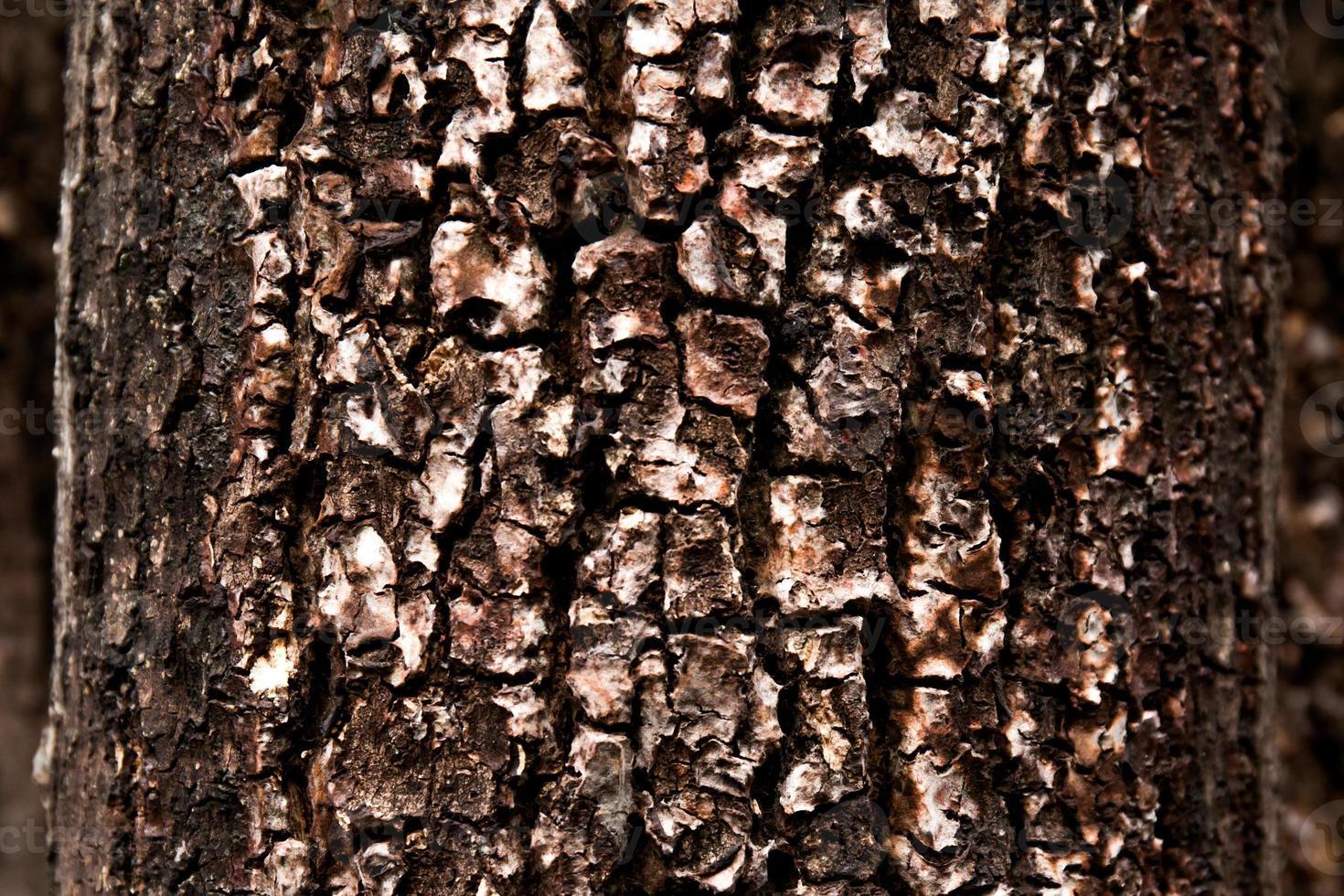 Textura de árbol viejo y seco para el fondo foto