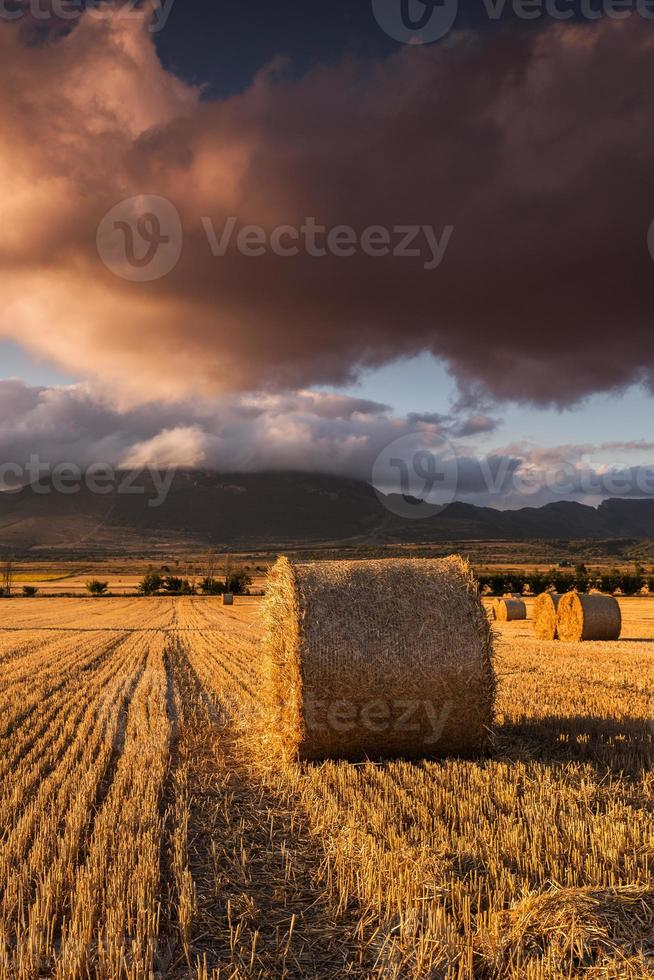 Round straw bales in the fields at sunset photo