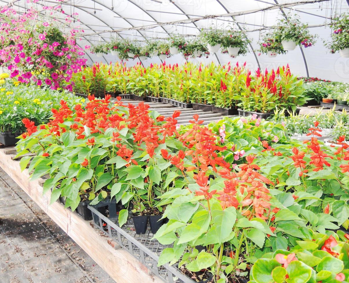 Glasshouse with plants photo
