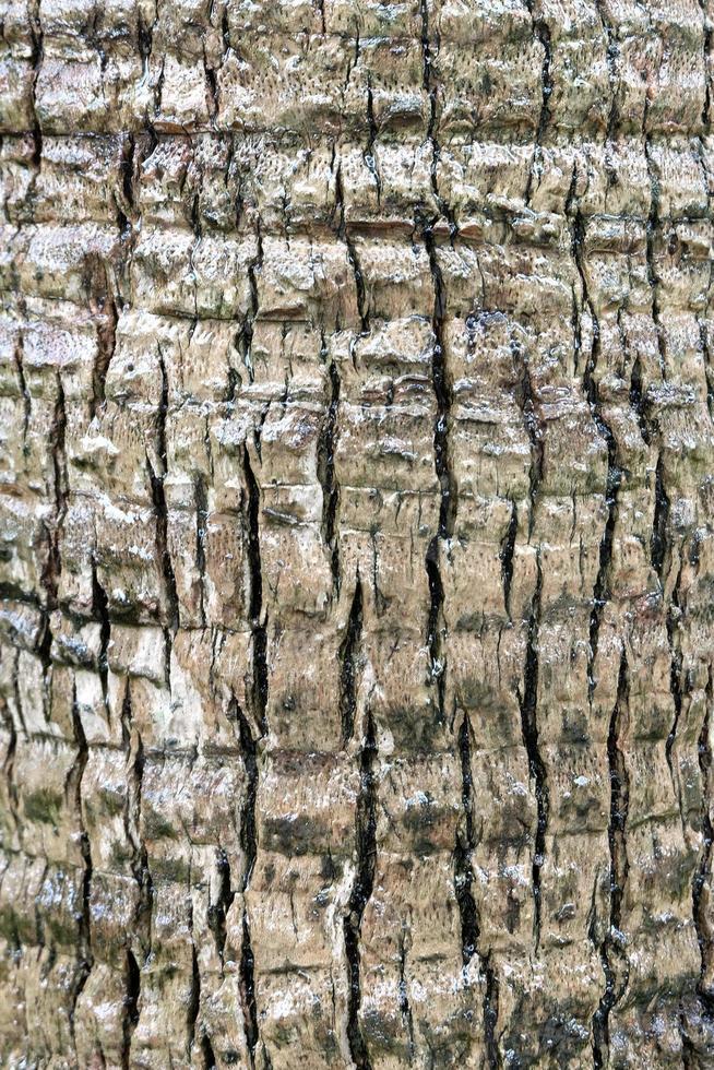 Bark of the tree photo