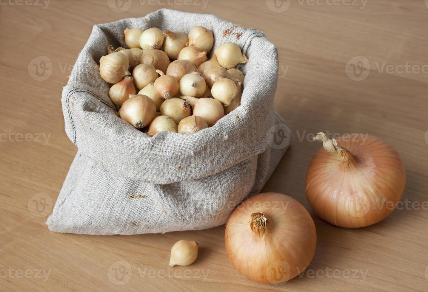 cebollas en bolsa para plantar foto