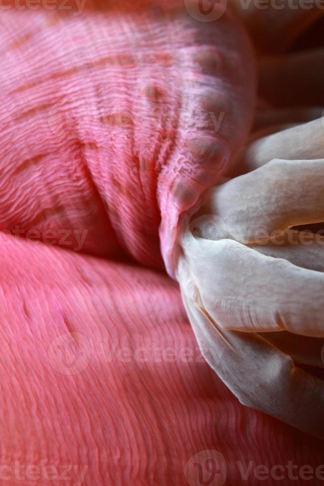 Magnificent Sea Anemone close up photo