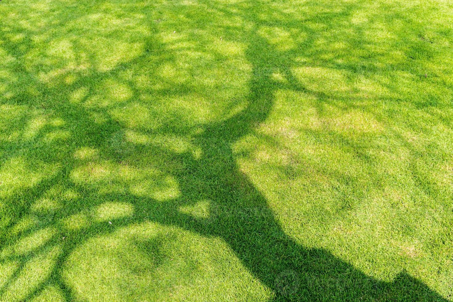 Sombra de árbol sobre hierba verde corta en primavera foto