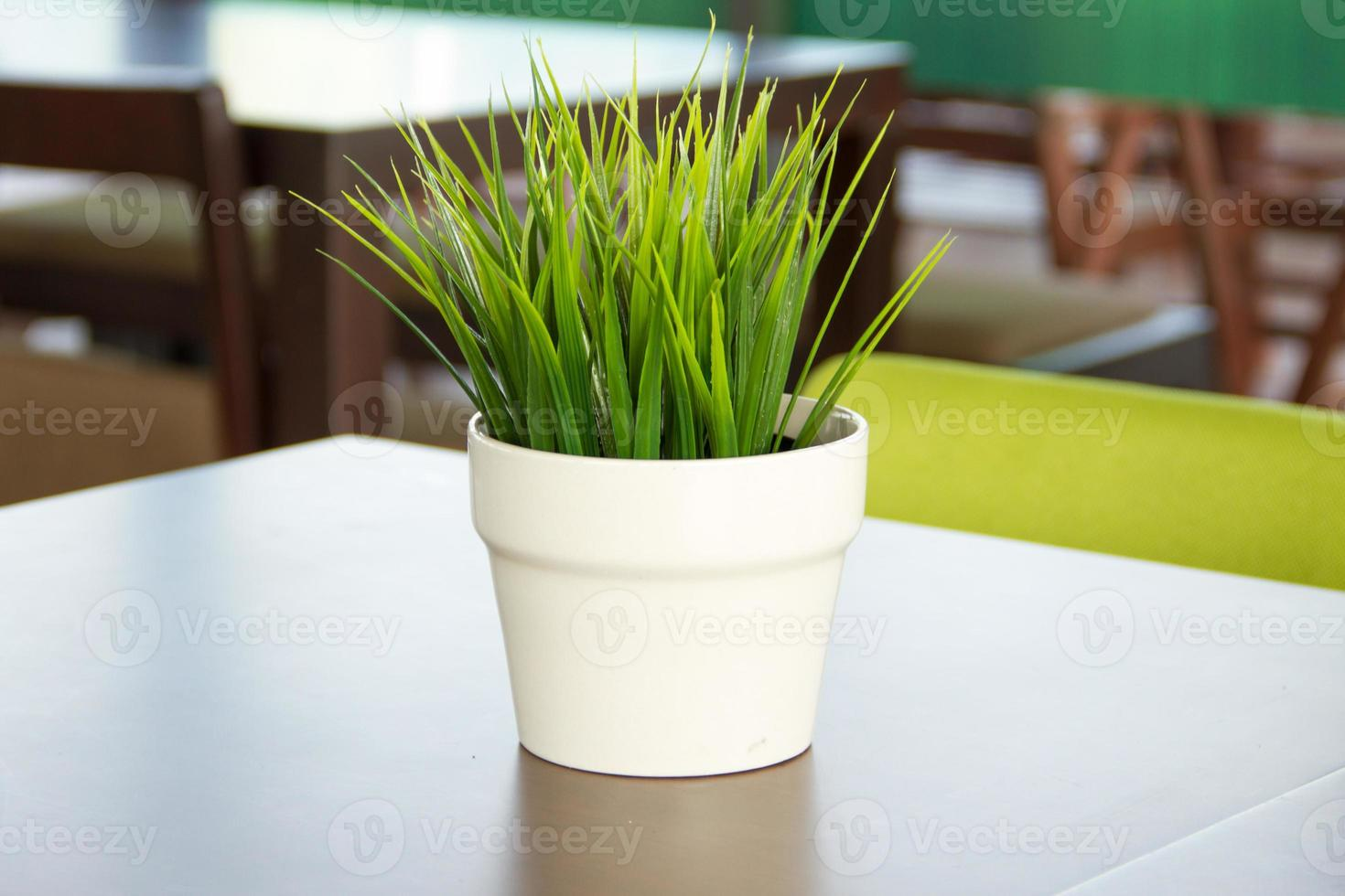 Potted grass put on the table photo