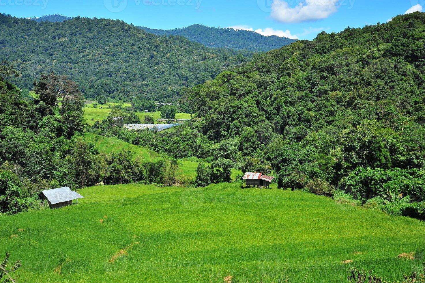 Rice Paddy Fields on the Mountain photo