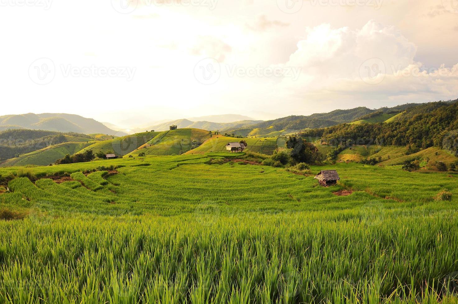 campos de arroz en las colinas foto