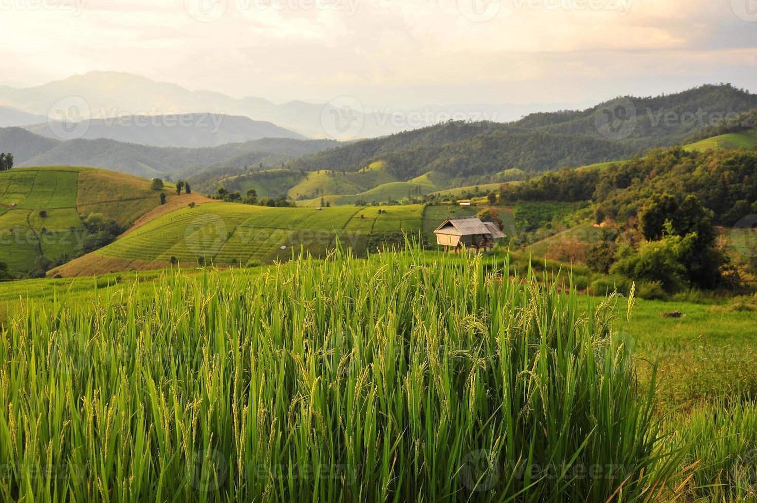 Rice Paddy Fields at Sunset photo