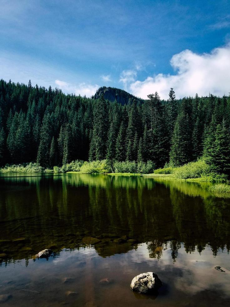 Green pine trees in Oregon photo