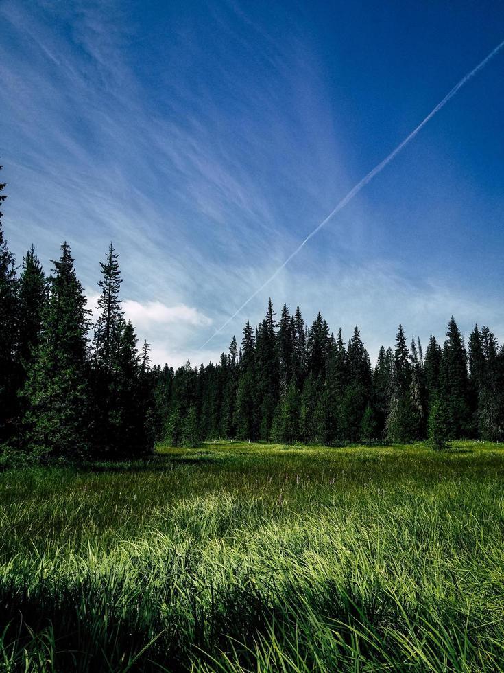 Green grass field under blue sky photo
