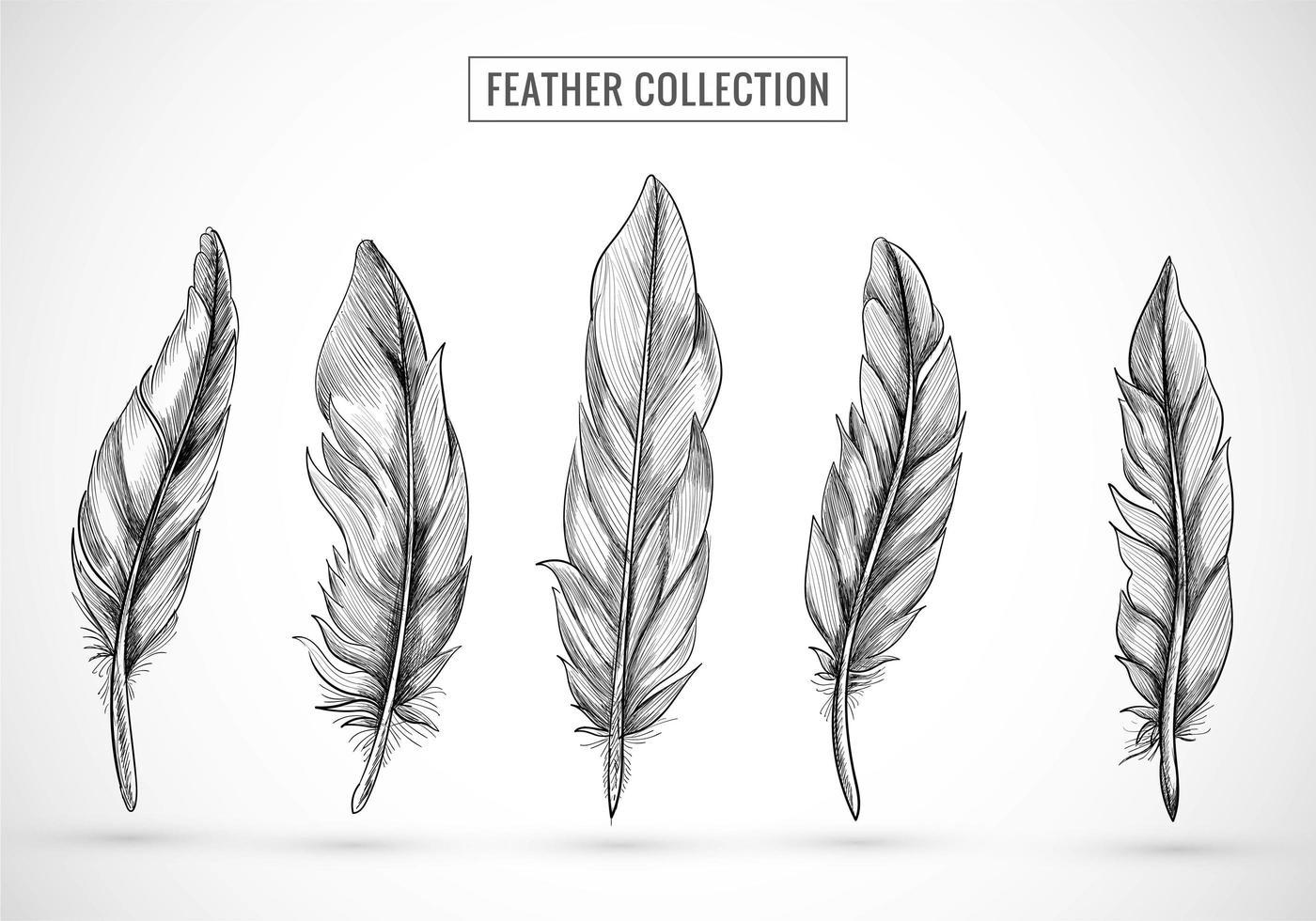 diseño de conjunto de bocetos de plumas dibujadas a mano vector