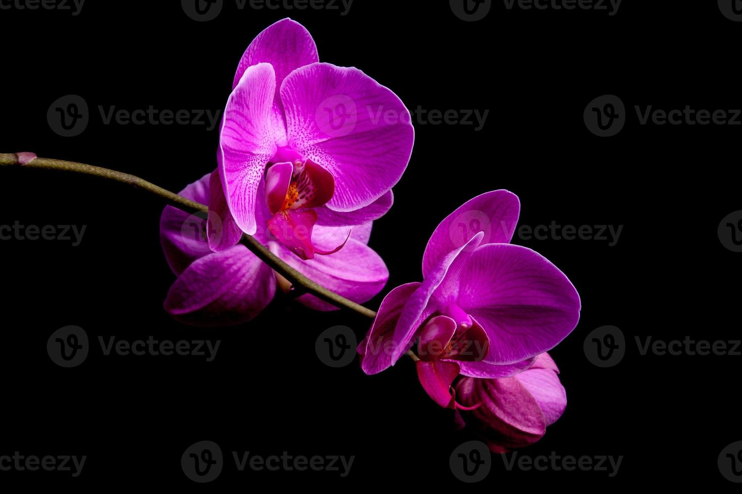 flores de orquídea sobre fondo negro foto