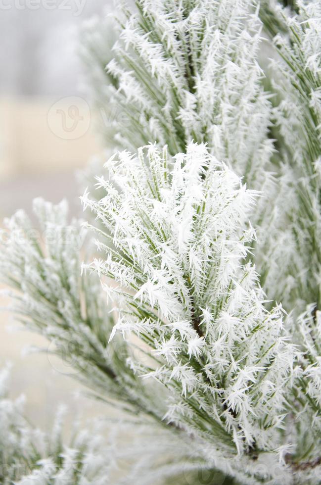 hiver, sapin, givre, naturaleza foto