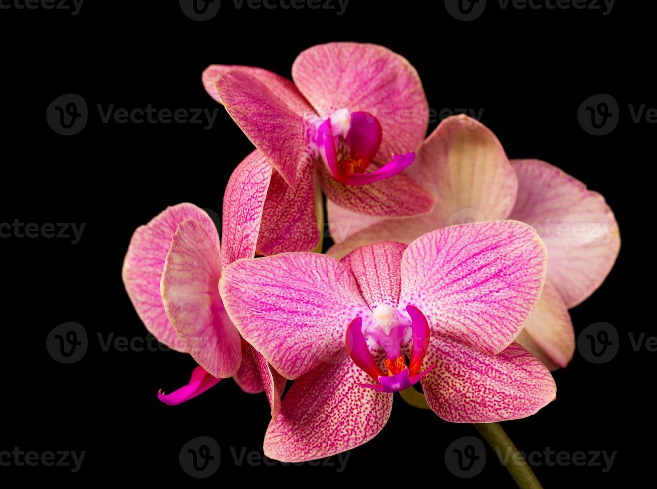 hermosa orquídea sobre fondo oscuro foto