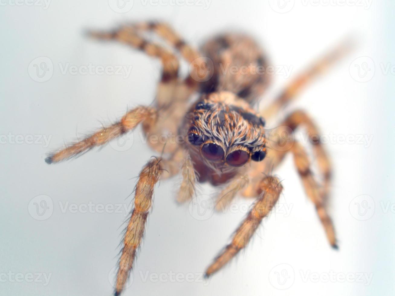 casa araña saltarina foto