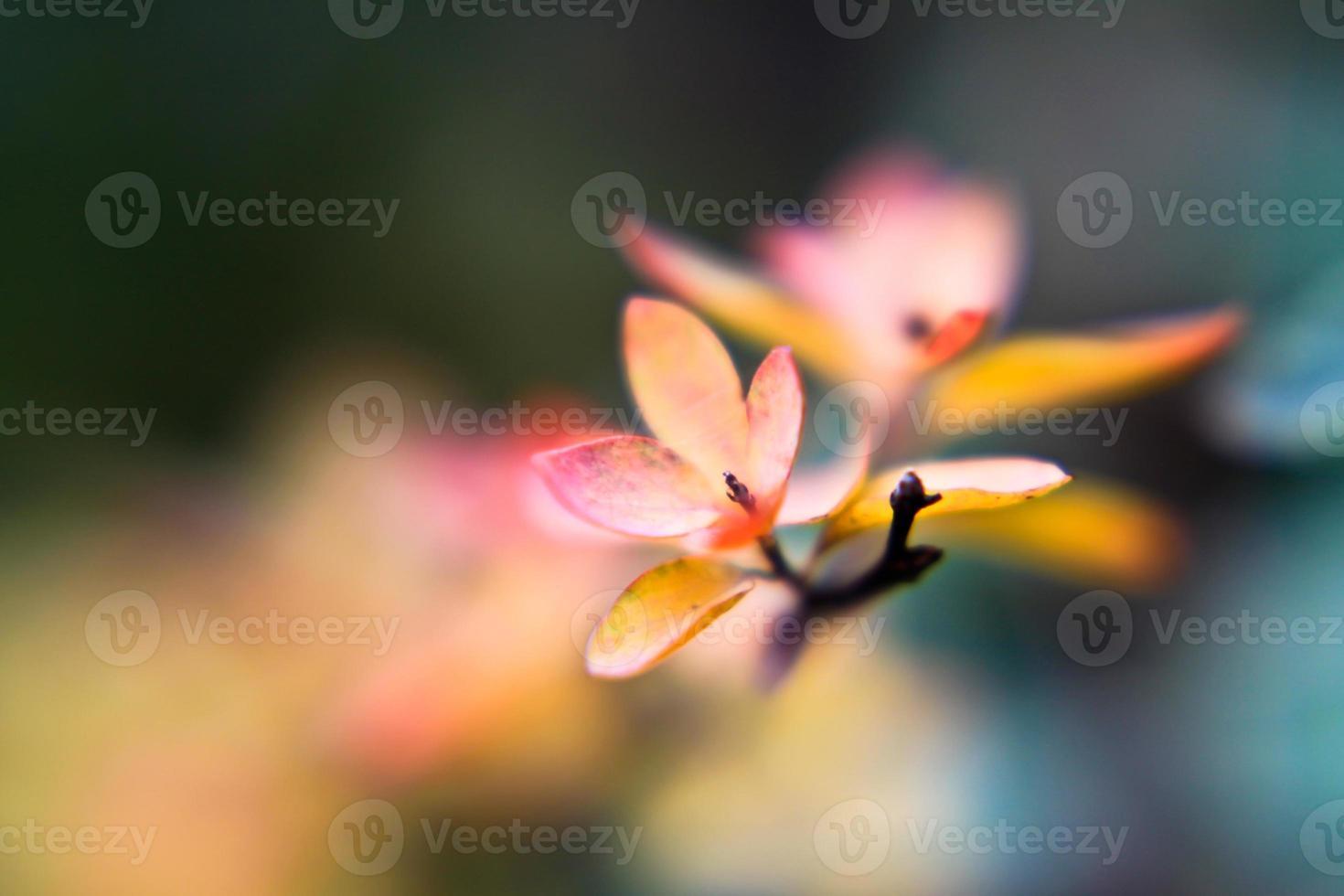 herbstfärbung photo