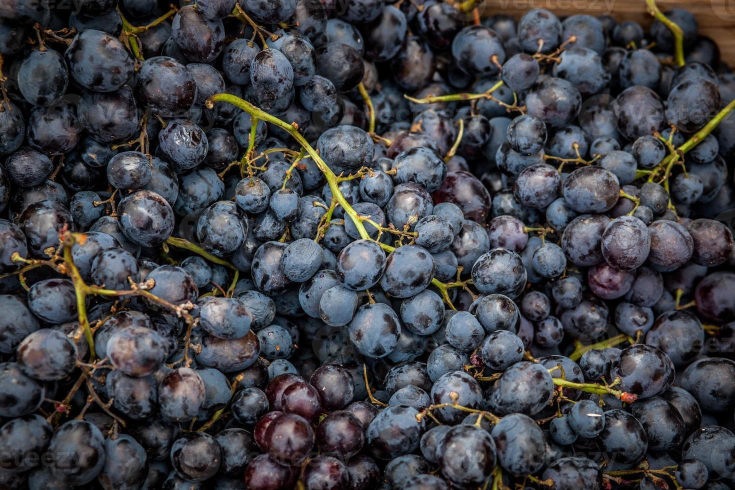 blauwe druiven foto